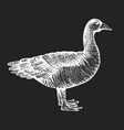 hand drawn farm bird poultry sketch on chalk vector image