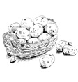 Potatoes scetch in a basket on white bsckground vector image