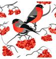 bullfinch and rowan seamless pattern vector image