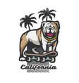 bulldog on a skateboard on background vector image