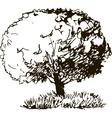 deciduous tree with leaves and grass vector image