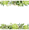 Floral design square card design with succulent vector image