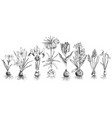 hand drawn spring bulbous flowers vector image