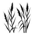 silhouette of the reed vector image vector image