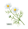white daisy flower with bud and leaves vector image vector image
