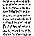 100 dogs vector | Price: 1 Credit (USD $1)