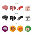 brain kidney blood vessel skin organs set vector image vector image