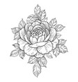 hand drawn floral composition with rose and leaves vector image vector image