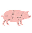 pork chart vector image vector image