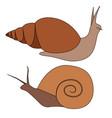 set contour colored snails various shapes vector image vector image