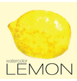 watercolor painting lemon vector image