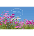 blurred with cosmos flowers vector image vector image
