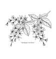 sandpaper vine flower and leaf hand drawn vector image vector image