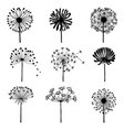 set doodle dandelions decorative elements vector image vector image