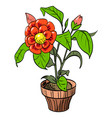 cartoon image of house plant vector image