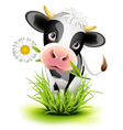 little holstein cow vector image vector image