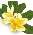 Realistic frangipani flower with leaves vector image