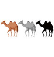 set of camel character vector image