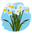 bouquet fresh aromatic daffodils light blue vector image