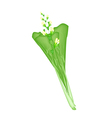Fresh Green Mustard Plant on A White Background vector image vector image