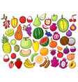 group tropical fruits colorful doodles cartoon vector image