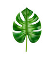 monstera leaf with stable and holes on foliage vector image