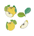 Quince with leaves set vector image vector image