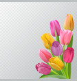 spring card with tulips vector image vector image