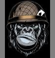gorilla in military helmet vector image vector image