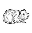 hamster rodent pet animal sketch engraving vector image