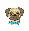head dog pug with bow tie hand-painted portrait vector image