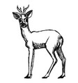 roe deer from forest vector image vector image