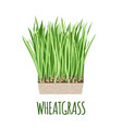wheatgrass icon in flat style on white background vector image vector image