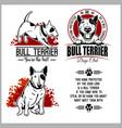 bull terrier - set for t-shirt logo vector image vector image