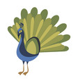 cartoon peacock a cute vector image