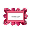 frame pink raspberry berries on a white vector image