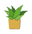 potted plant decoration botanic natural vector image vector image