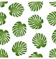 philodendron monstera leaf on white background vector image vector image