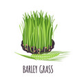 barley grass icon in flat style isolated on white vector image vector image