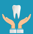 hands doctor dentist holding white human tooth vector image