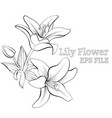 line drawn botanical sketch with flowers vector image vector image