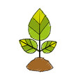 natural plant with leaves and ground to ecology vector image vector image