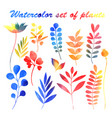 watercolor set plants vector image vector image