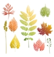 Collection of leaves and grass imprints vector image