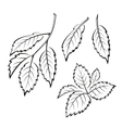 Elm Leaves Pictogram Set vector image