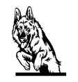 german shepherd dog in jump - isolated vector image vector image