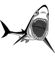 Shark fish head symbol for mascot vector image
