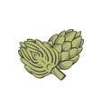 artichoke vegetable vector image vector image