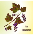 Black currant composition vector image
