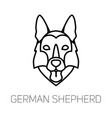 german shepherd tongue out dog breed linear face vector image